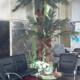 palmiye 2 li
