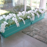 girişe orkide
